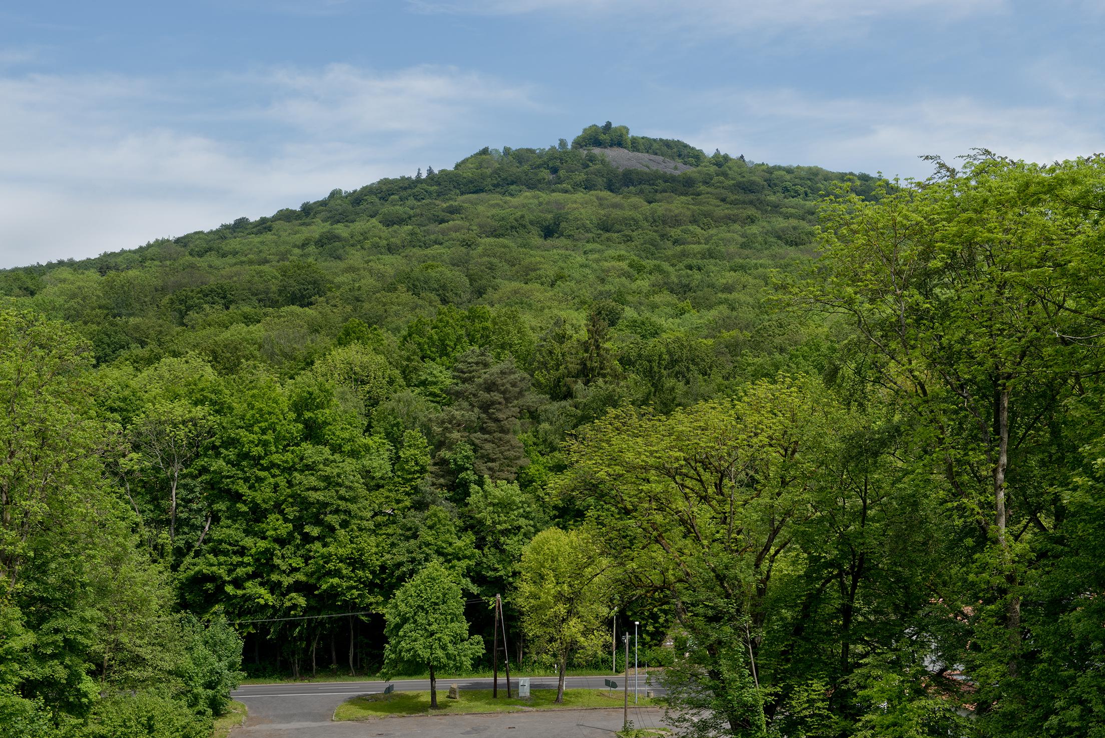 Foto: Blick auf einen grün bewaldeten Berg