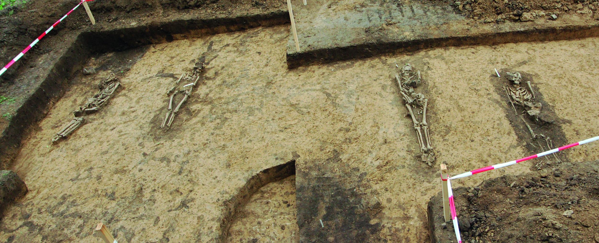 Archäologische Ausgrabungsfläche mit vier freigelegten Skeletten nebeneinander
