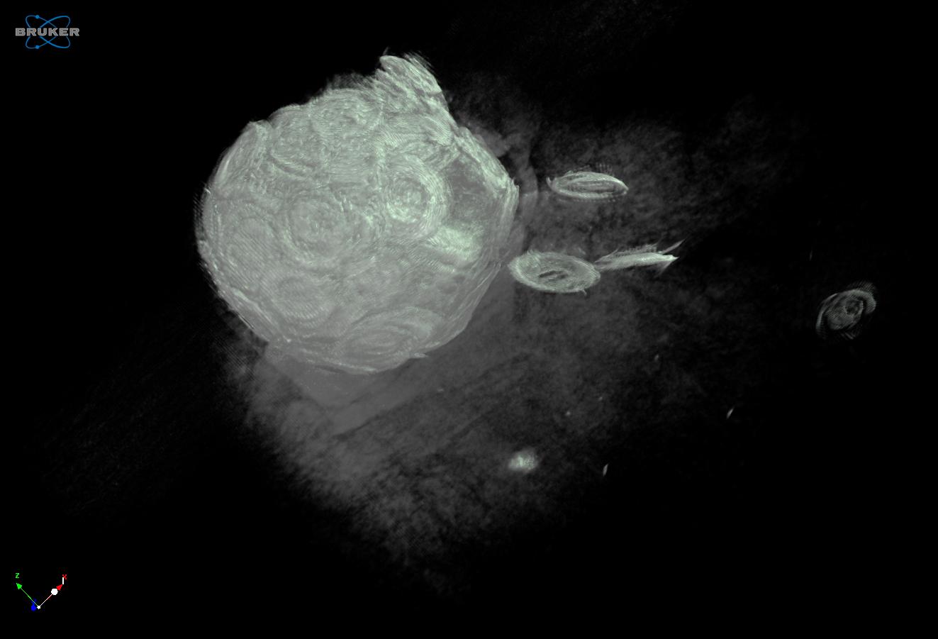 CT-Aufnahme mit weißen Schemen vieler dicht aneinander gepackter Münzen