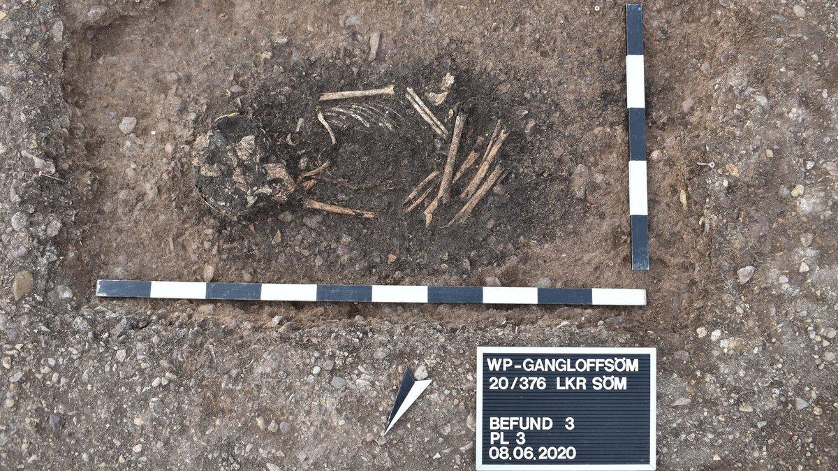 Im Boden als dunkle Verfärbung erkennbare einstige Grube mit Schädel und Knochen